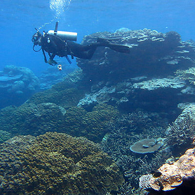 diver swimming near a coral reef